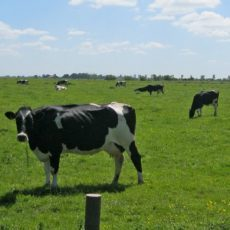[Open brief] Agrarische ondernemers helpen Twente wel degelijk verder